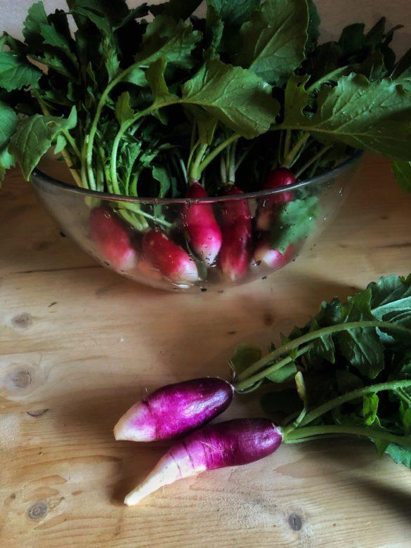bio organické redkvičky